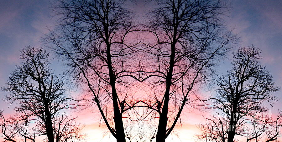 Tree Photograph - A Gift by Amy Sorrell