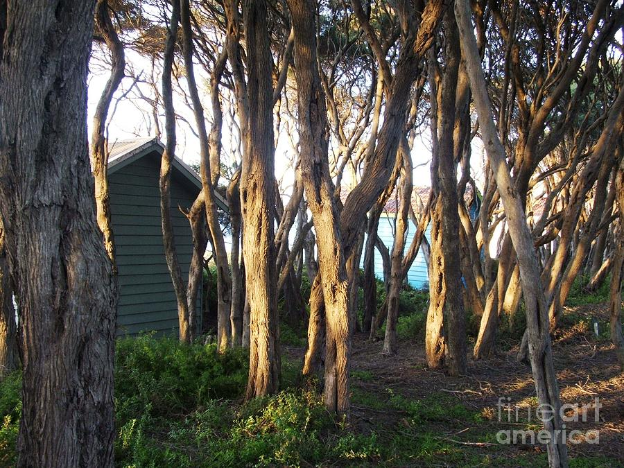 Trees Photograph - A Glimpse Of Paradise by Therese Alcorn