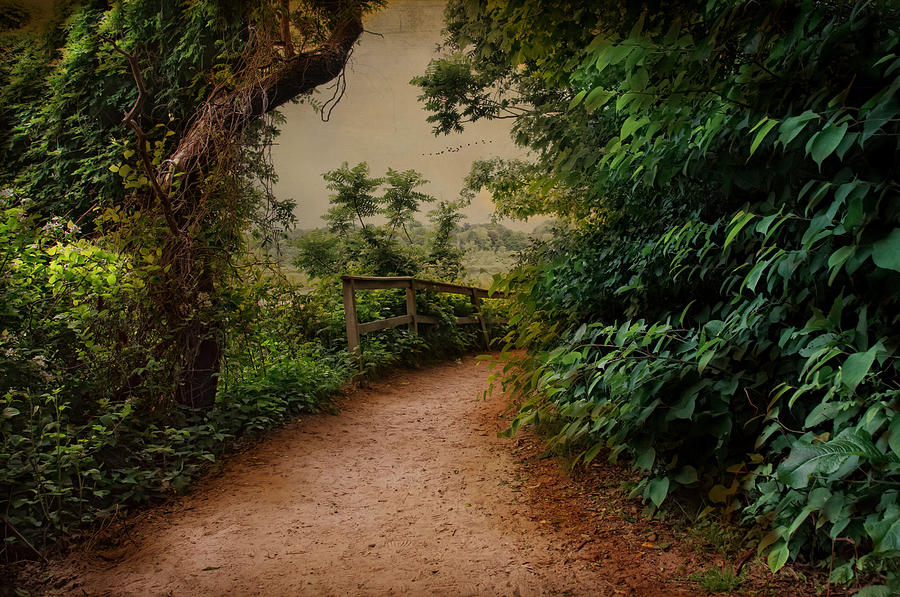 Landscape Photograph - A Green Mile by Robin-Lee Vieira