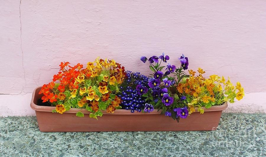 Flower Box Photograph - A Happy Place by Michele Penner