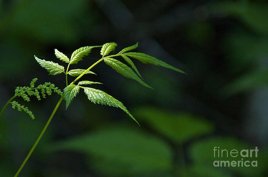 Sean Griffin Photograph - A Light In The Forest by Sean Griffin