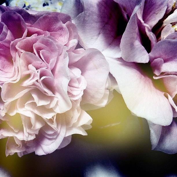 A Little Love In Every Petal Photograph by Alexis Vaughn