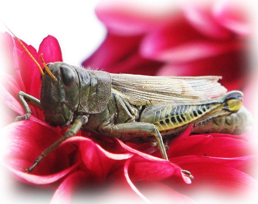 Grasshopper Garden Flowers Photograph - A Little Privacy Please by Victoria Sheldon