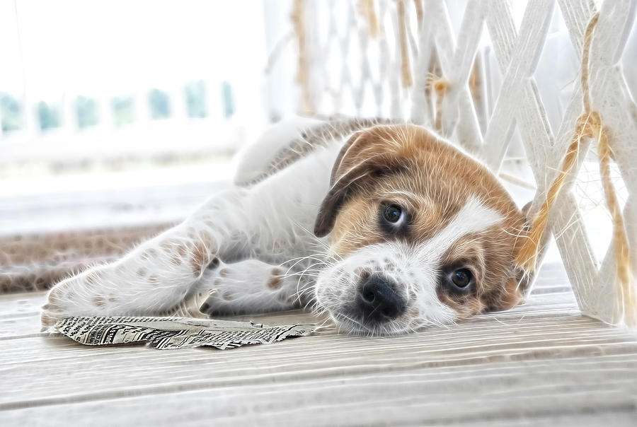 Puppy Photograph - A Little Rest by Tilly Williams
