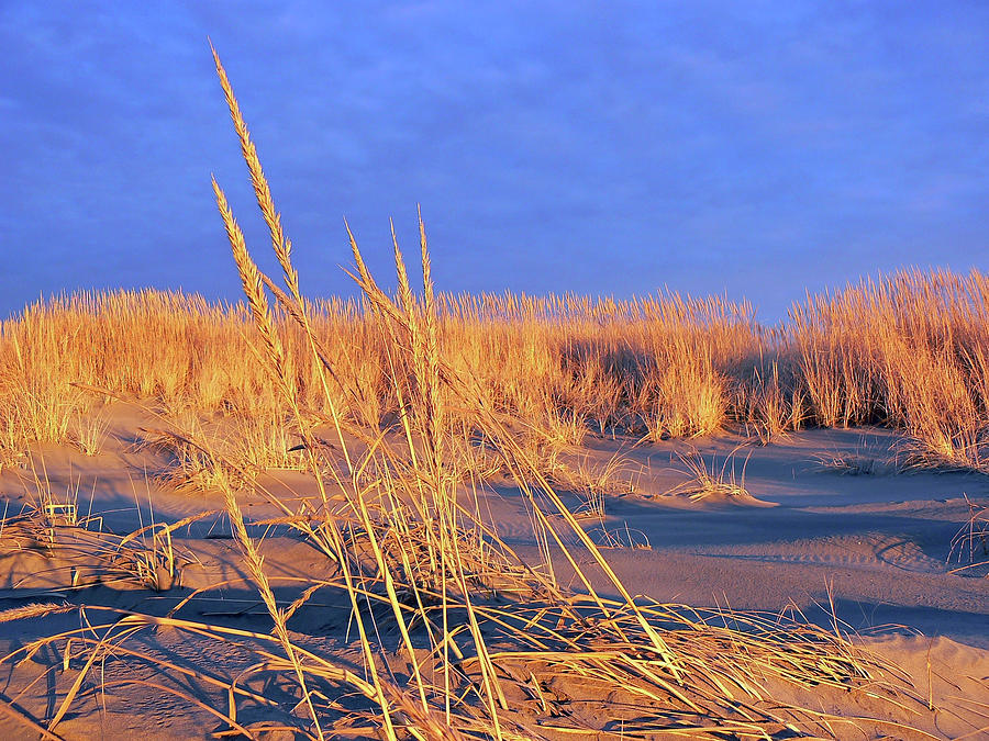 Gold Photograph - A Midas Touch  by Pamela Patch
