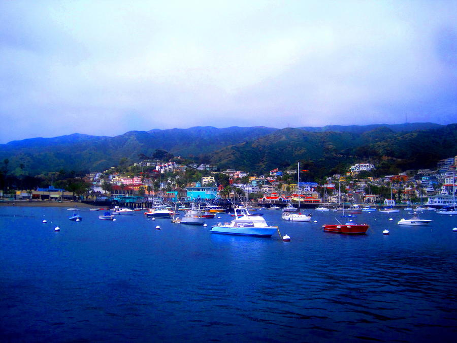 California Photograph - A Misty Morning In Avalon Harbor by Catherine Natalia  Roche