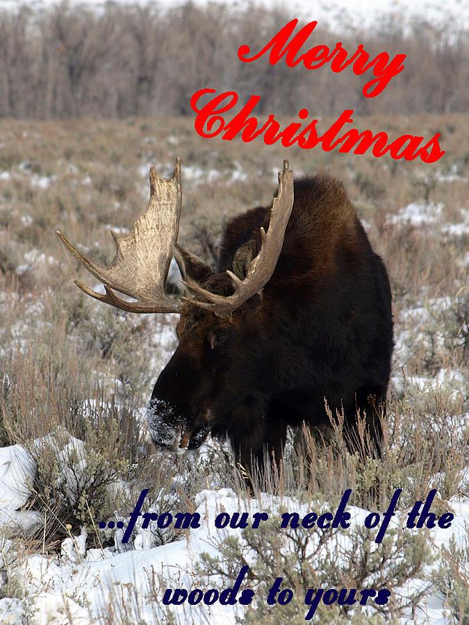 A Moose Christmas Wish Photograph by DeeLon Merritt