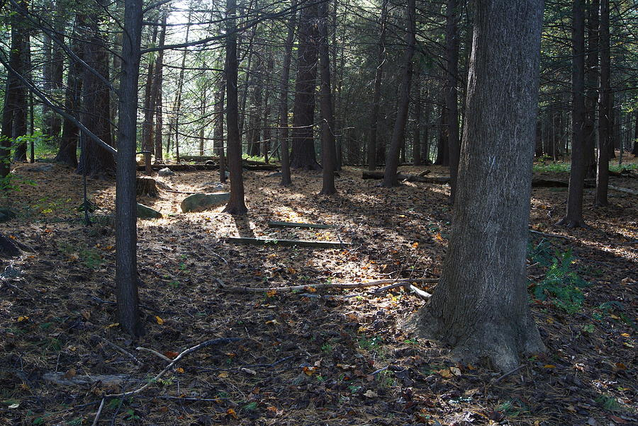 Woods Photograph - A Nature Walk by Margie Avellino