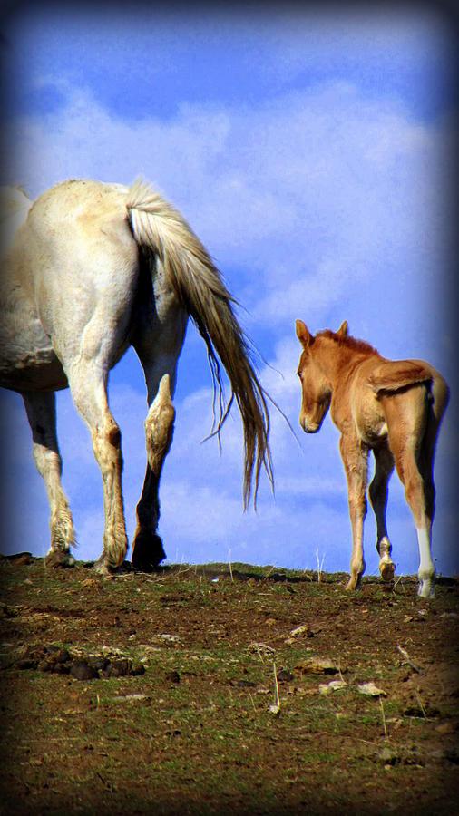 Horses Photograph - A New Life by Judy Garrett