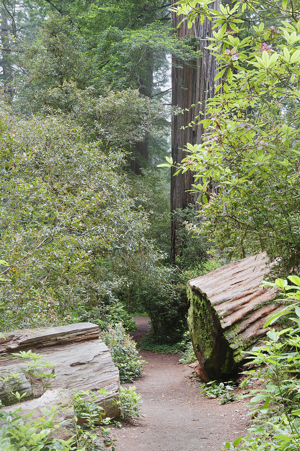prairie creek chatrooms 5 tips to enhance your visit to the redwoods these include prairie creek redwoods state park let's chat about five tips to enhance your redwood.