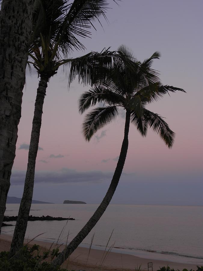 Palm Trees Photograph - A peaceful start by Peggy  McDonald