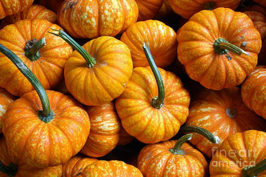 Pumpkins Photograph - A Peck Of Pumpkins by Kami McKeon