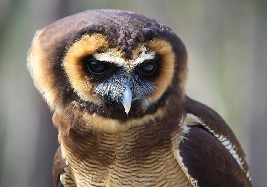 Owl Photograph - A Penny For Your Thoughts by Paulette Thomas
