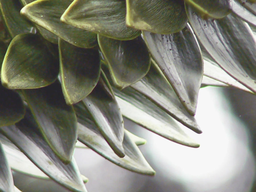 Monkey Puzzle Tree Photograph - A Piece Of The Puzzle  by Pamela Patch