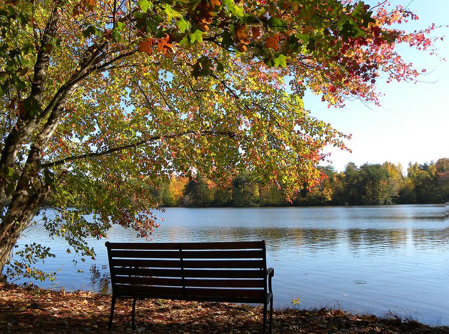 Bench.seat Photograph - A Place For Thanks Giving by Sandi OReilly