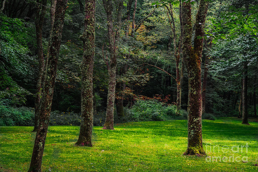 Place Photograph - A Place To Unwind by Scott Hervieux