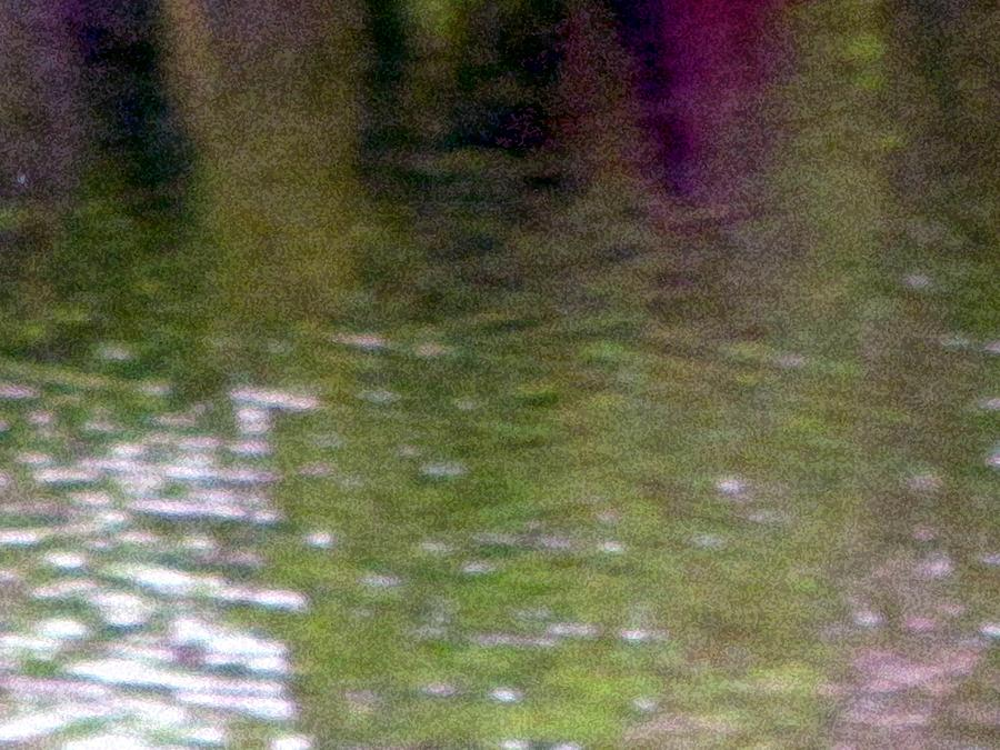 Pond Photograph - A Pond Reflection - Water by Susan Carella