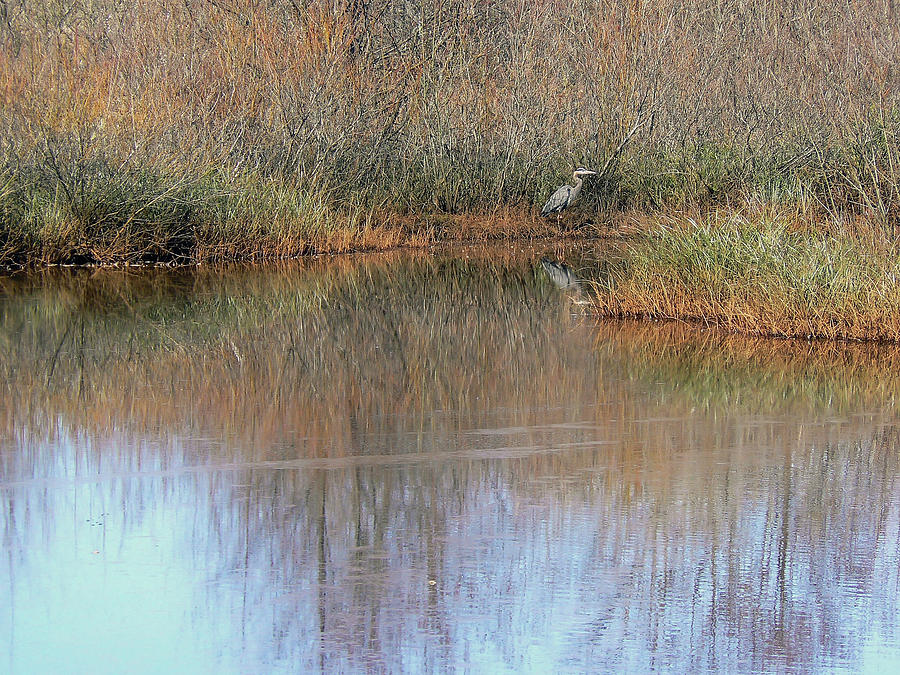 Water Photograph - A Quiet Place  by Pamela Patch