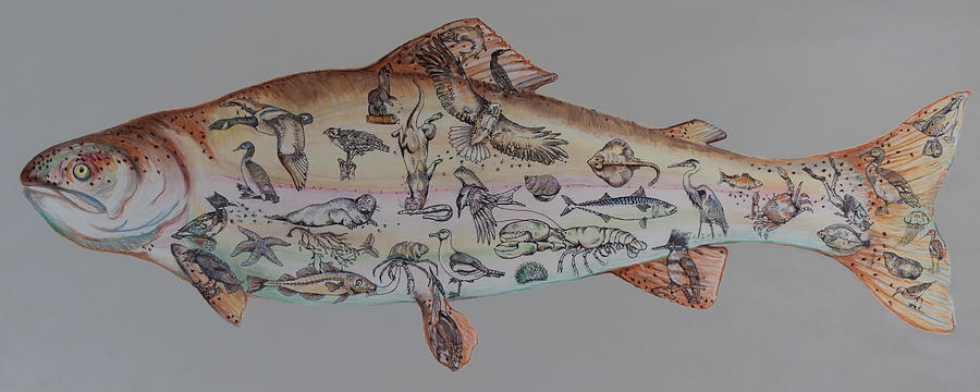 Cape Breton Drawing - A Rainbow Trout by Burland Murphy