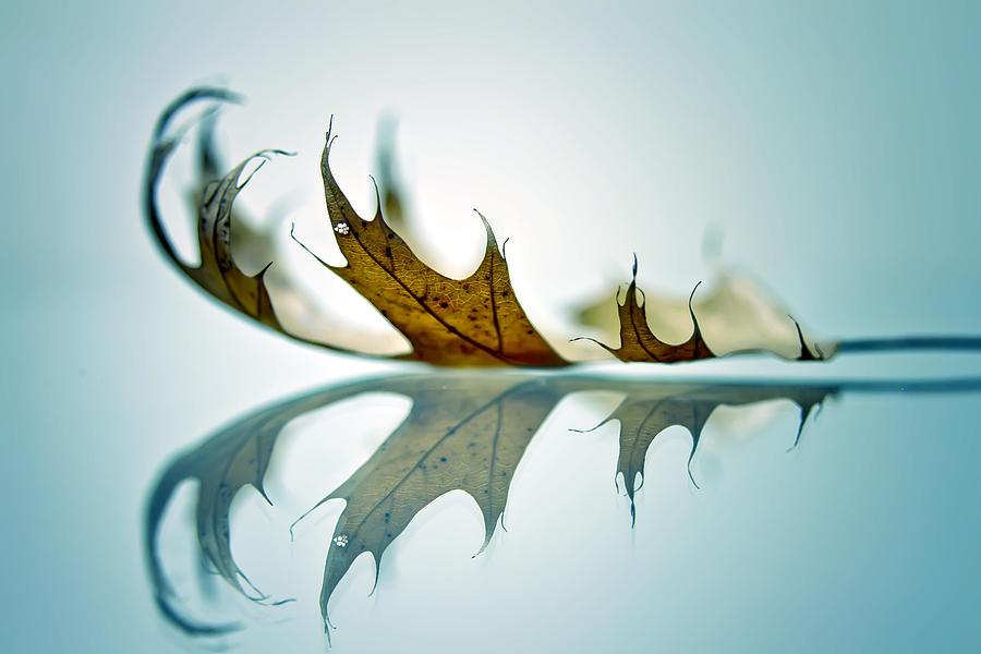 Autumn Photograph - A Saucerful Of Secrets by Dmitriy Mirochnik