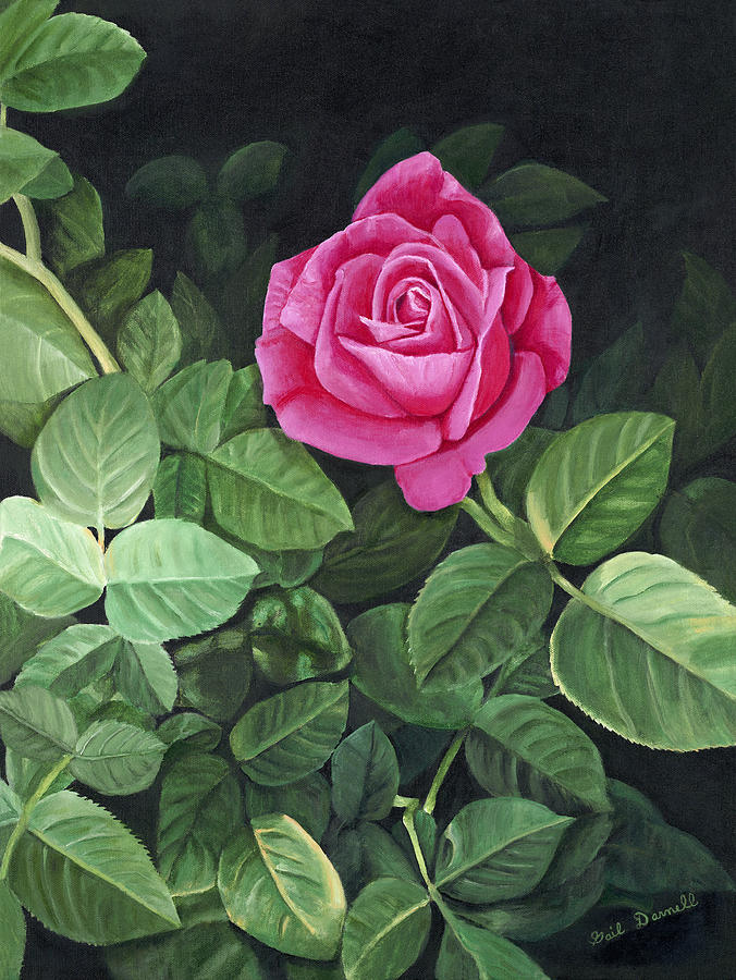 A Single Rose Painting By Gail Darnell