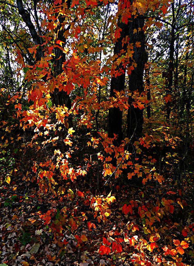 Autumn Scenes Photograph - A Slash Of Sunlight by Julie Dant