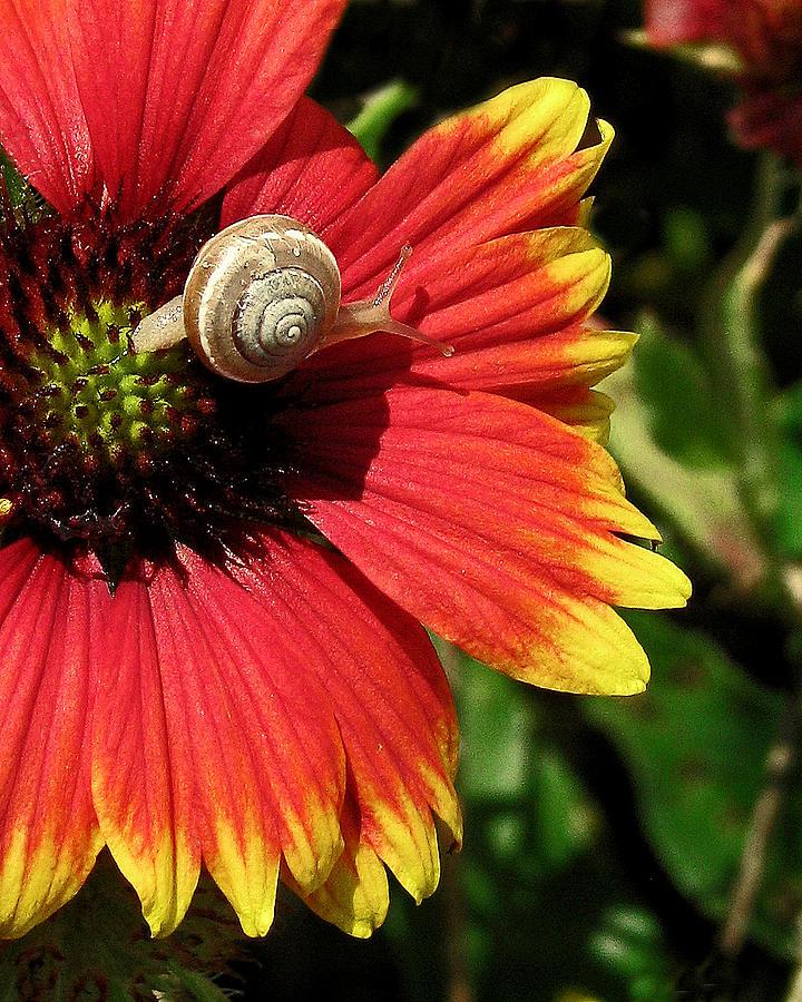 Nature Photograph - A Snails Pace by Peg Urban