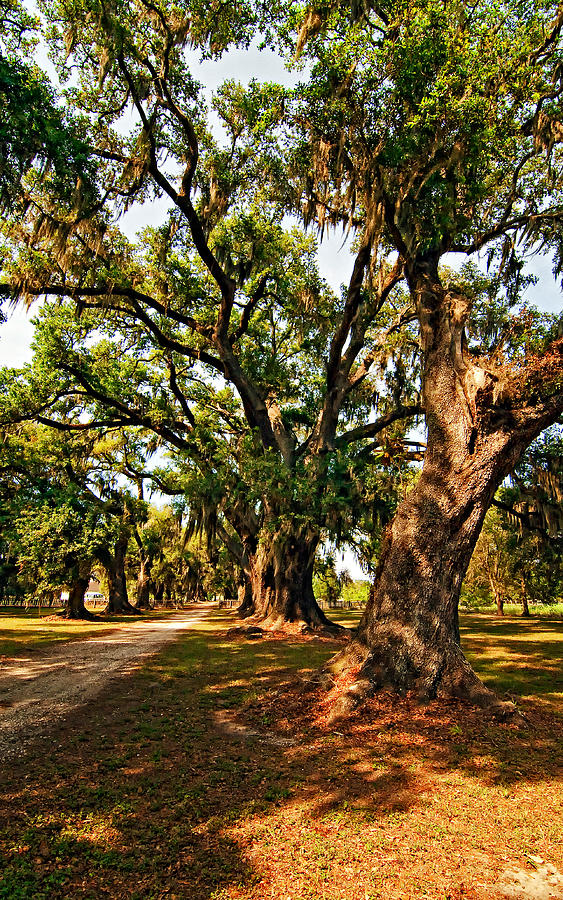 Evergreen Plantation Photograph - A Southern Stroll by Steve Harrington
