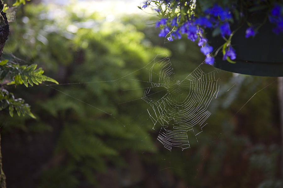 British Columbia Photograph - A Spider Web In A Garden by Taylor S. Kennedy