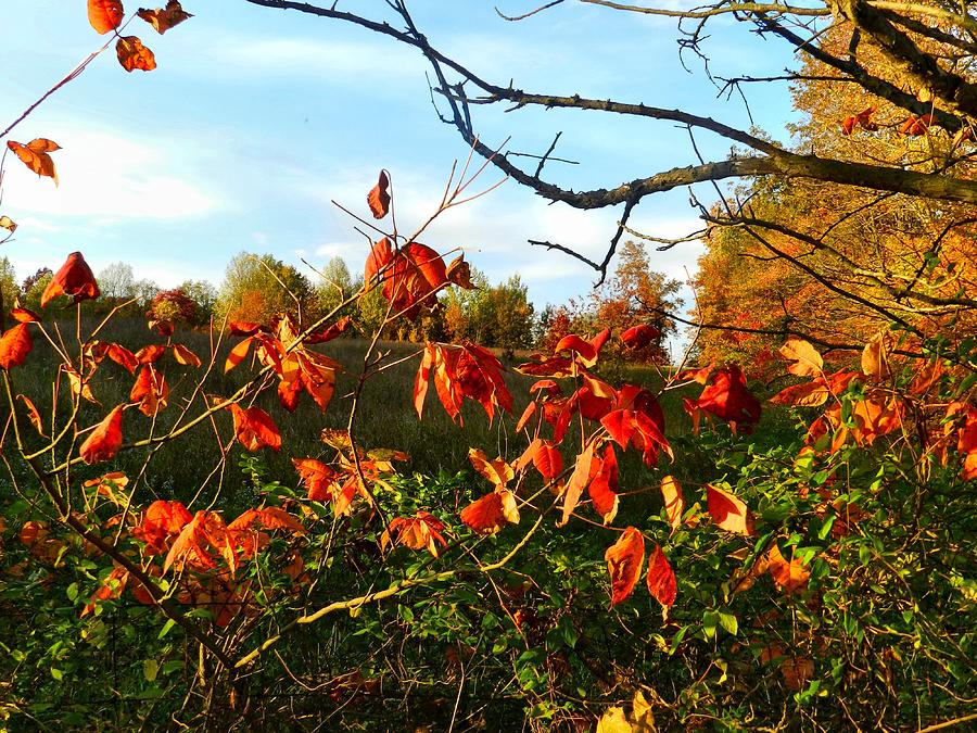 Autumn Photograph - A Splash Of Red II by Julie Dant