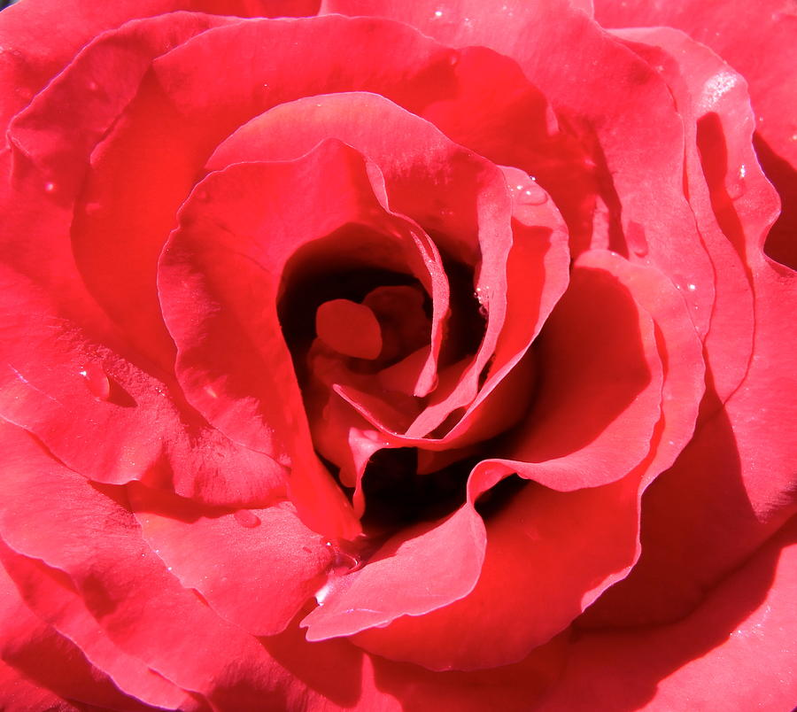 Rose Photograph - A Summers Kiss by Geoff Leckey