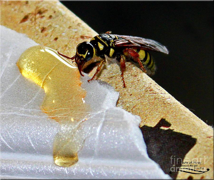 Yellowjacket Photograph - A Taste Of Honey by Rebecca Morgan
