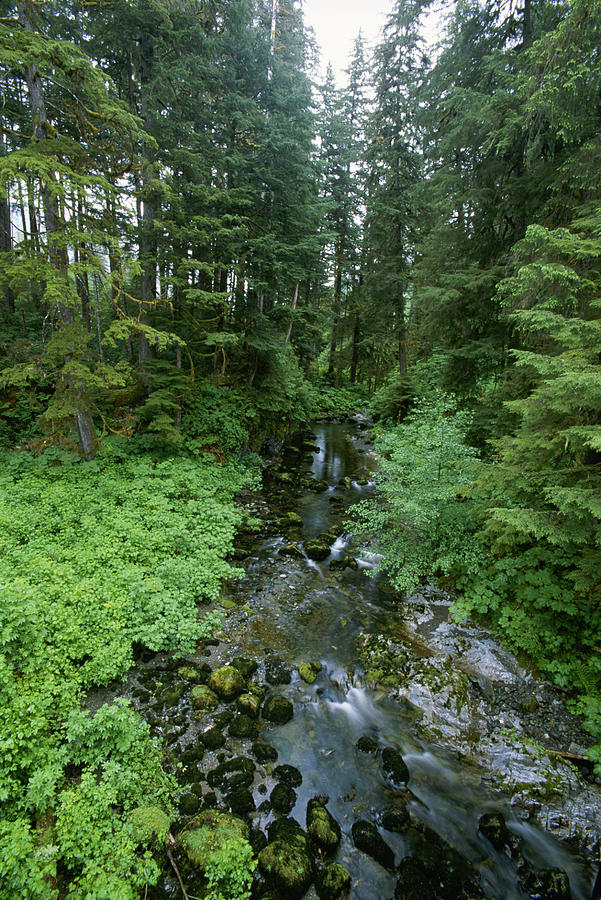 It's just an image of Clean Temperate Rainforest Drawing Model