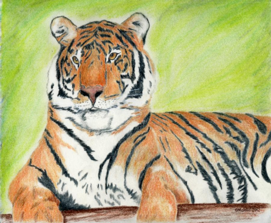 Tiger Drawing - A Tigers Rest by Mark Schutter
