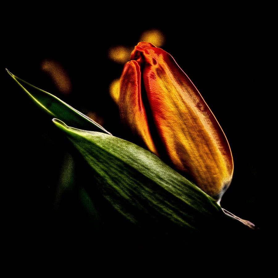 Yellow Photograph - A Tulip With Sheen by David Patterson