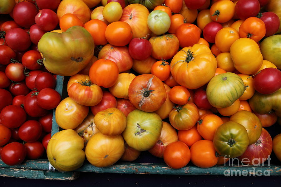 Tomato Photograph - A Variety Of Fresh Tomatoes - 5d17812 by Wingsdomain Art and Photography