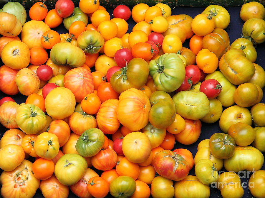 Tomato Photograph - A Variety Of Fresh Tomatoes - 5d17904 by Wingsdomain Art and Photography