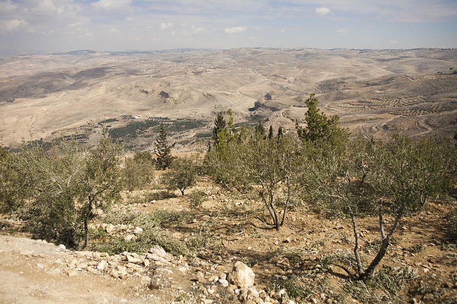 Mount Nebo Photograph - A View Of Olive Trees And Moses by Taylor S. Kennedy