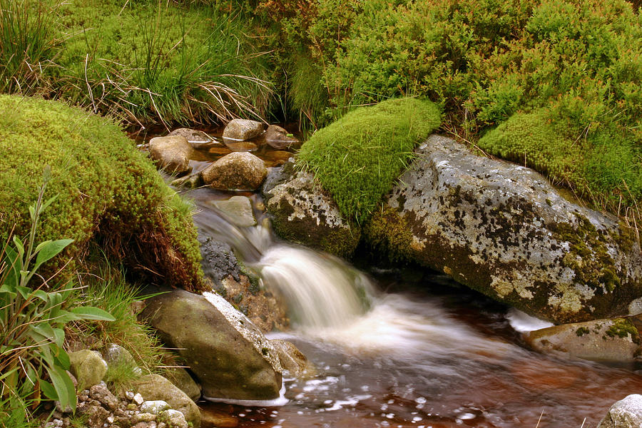 Forest Photograph - A Wicklow Stream by Martina Fagan
