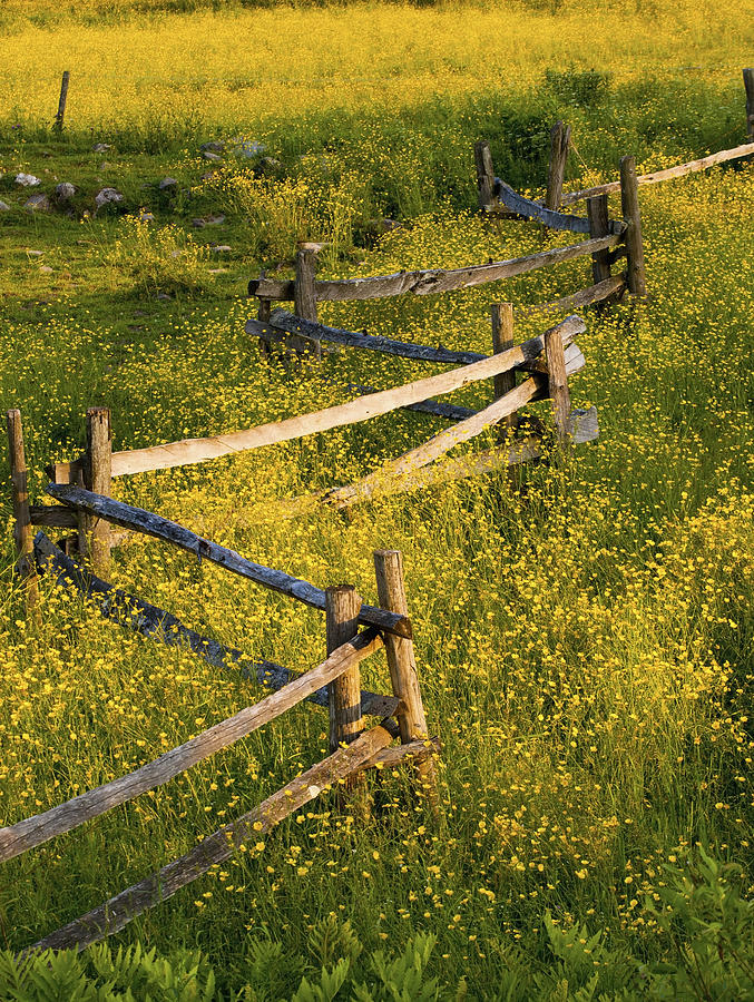 Blossom Photograph - A Wooden Rail Fence Surrounded By by David Chapman