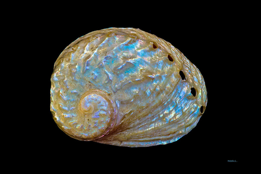 Abalone Shell Photograph - Abalone Shell by Mitch Shindelbower