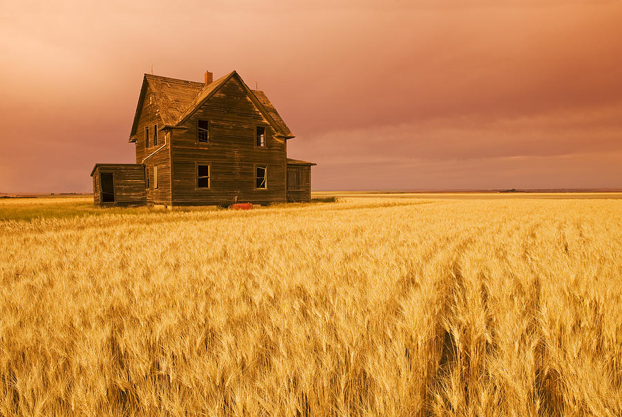 Abandoned Photograph - Abandoned Farm House, Wind-blown Durum by Dave Reede