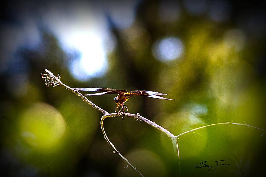 Dragonfly Photograph - About To Plunge by Barry Jones