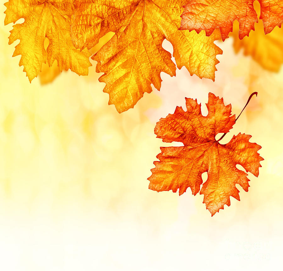 abstract autumn background photograph by anna om