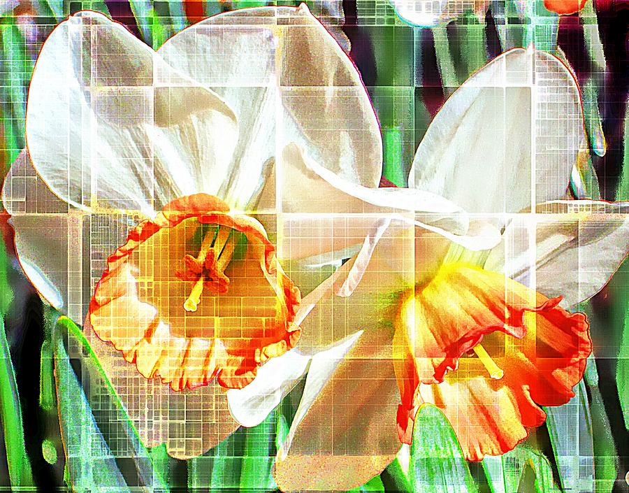 Daffodils Photograph - Abstract Daffodils  by Cathie Tyler