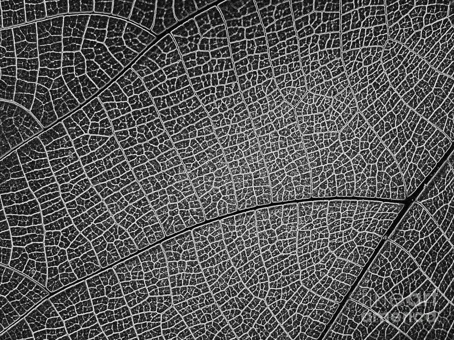 Abstract Photograph - Abstract Pattern by Yali Shi
