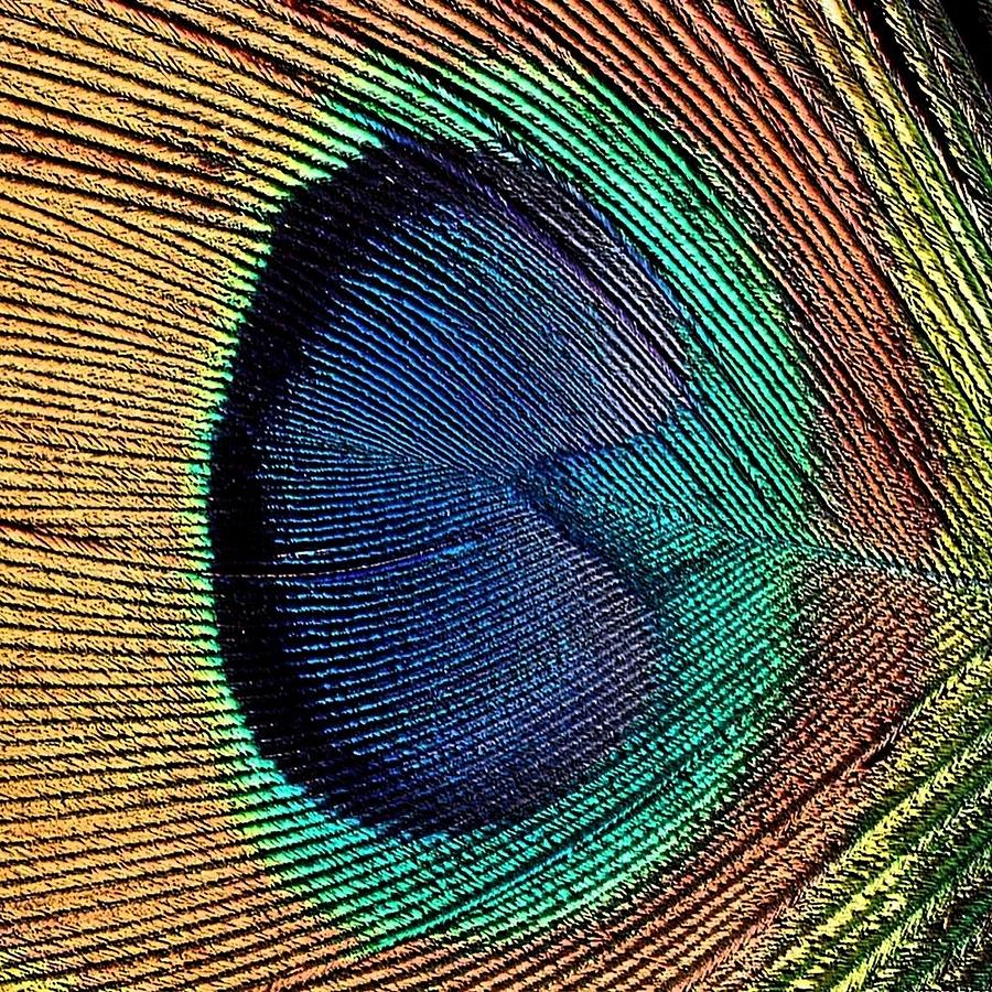 Macro Photograph - Abstract Peacock Feather by Florene Welebny