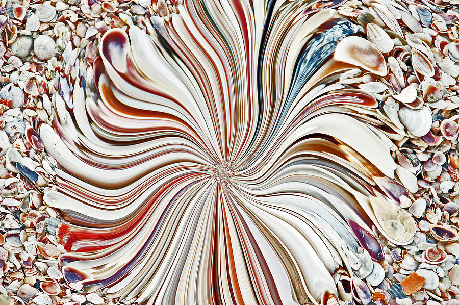 Florida Photograph - Abstract Seashells by Aimee L Maher Photography and Art Visit ALMGallerydotcom