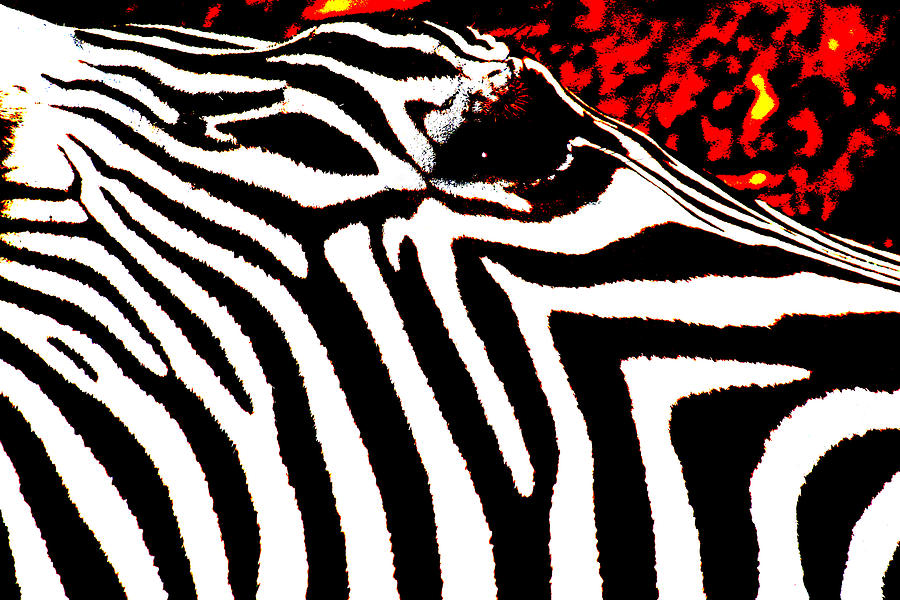 Animals Photograph - Abstract Zebra 001 by Lon Casler Bixby