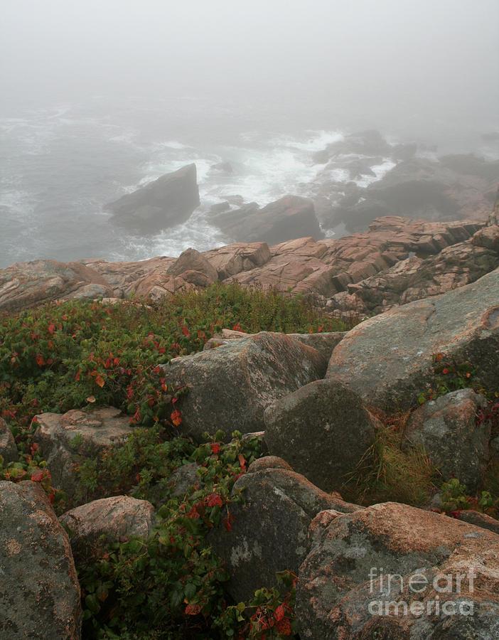 Acadia National Park Photograph - Acadia National Park Foggy Coast by Chris Hill